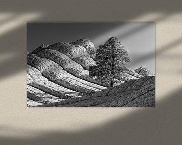 White Pocket, Arizona van Henk Meijer Photography