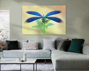 dragonfly... Beautiful Demoiselle *Calopteryx virgo* van wunderbare Erde