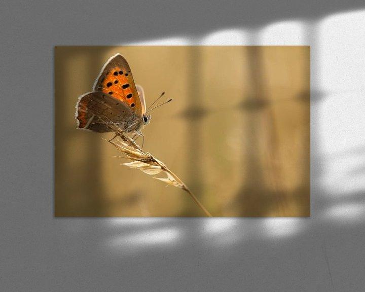 Sfeerimpressie: Kleine vuurvlinder van Bas Mandos