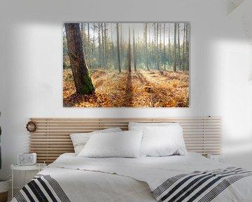 Schaduwlijnen in het bos van Arjen Roos