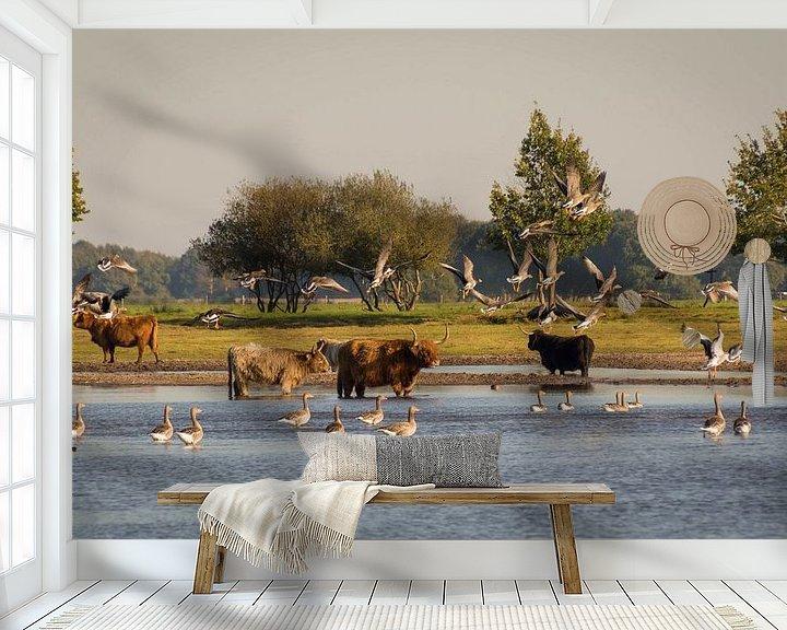 Sfeerimpressie behang: Schotse Hooglanders in Drenthe van Jacqueline Kroezen