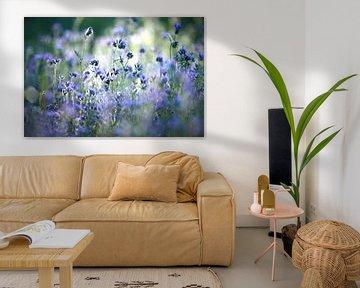 Kornblumen von Jana Behr