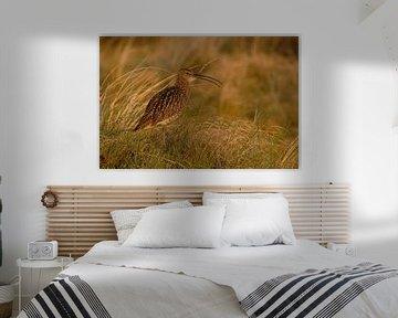im Abendlicht... Grosser Brachvogel *Numenius arquata* von wunderbare Erde