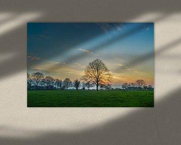 schöner Sonnenuntergang über einer Wiese mit einem einsamen Baum von Patrick Verhoef