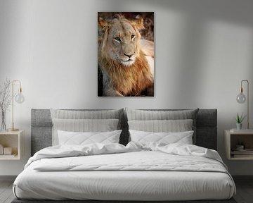 Junges Löwenmännchen, Südafrika von W. Woyke
