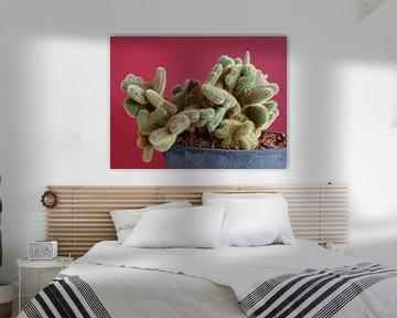 Kamerplant: SciFi Cactus 1-9 van MoArt (Maurice Heuts)
