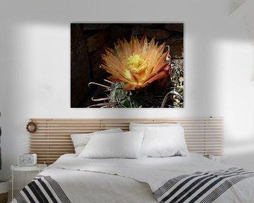 Prachtige bloem, gegroeid uit één cactus! von Natascha Lorkowska