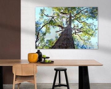 Australische Eucalyptusboom van Ingrid Meuleman