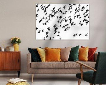 Vogels van Hans van der Does