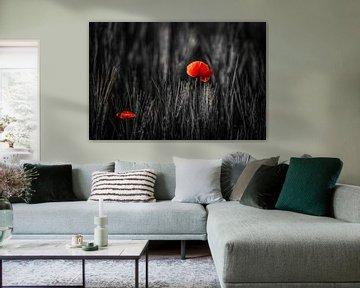 Mohnblumen von Frans Scherpenisse