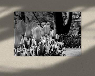 Tulpenbloembed in zwartwit van de buurtfotograaf Leontien