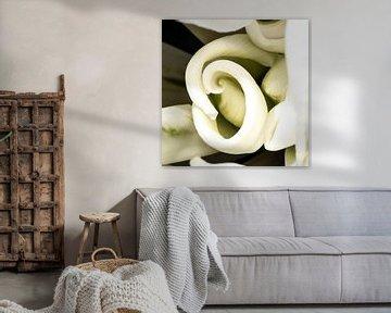 In het hart van de witte tulp von de buurtfotograaf Leontien