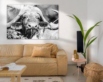 Büffel (Südafrika) von Lizanne van Spanje