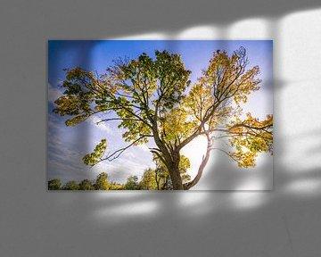 Herfstboom met tegenlicht van Martin Frunt