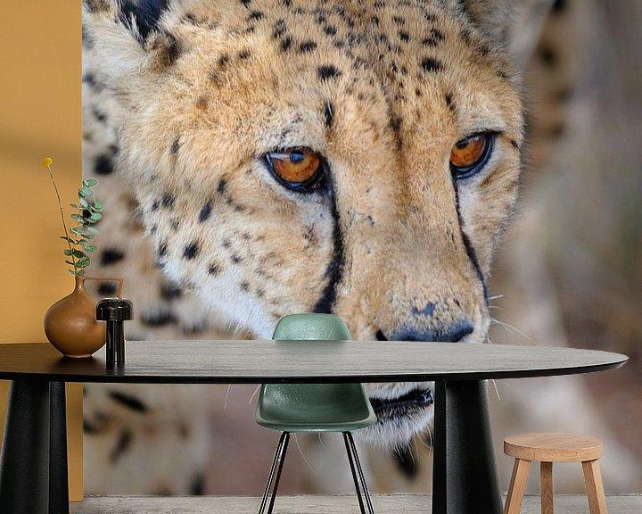 Sfeerimpressie behang: Jachtluipaard van Peter Vruggink