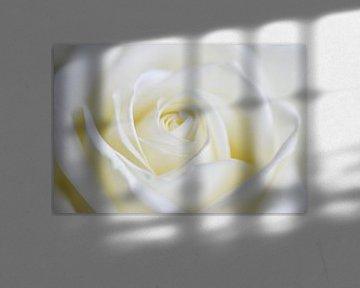 Canvas van een close-up van een roos van Jeroen Jonker