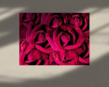 Rose fantasy von Susan Hol