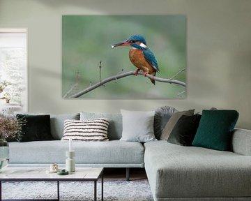 IJsvogel met klein visje van Rob Kuiper