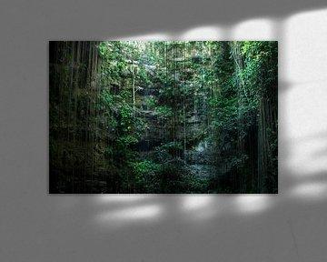 Cenote Mexico von Robert Beekelaar