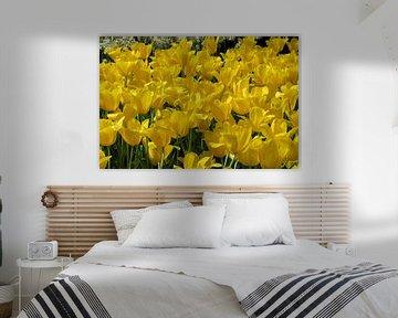 Tulpen aus Holland von Anouk Davidse