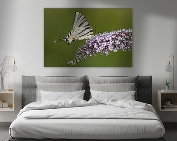 Koningspage vlinder op Sering von Rob Kuiper