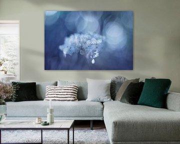 Fragile in blue von LHJB Photography