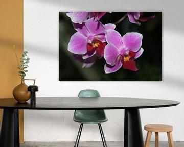 Orchidee von Simone van der Heide