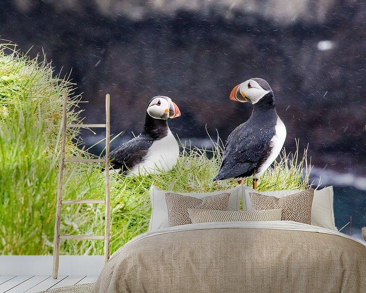 Sfeerimpressie behang: Papegaaiduikers in de regen op Papey eiland in IJsland van Anneke Hooijer