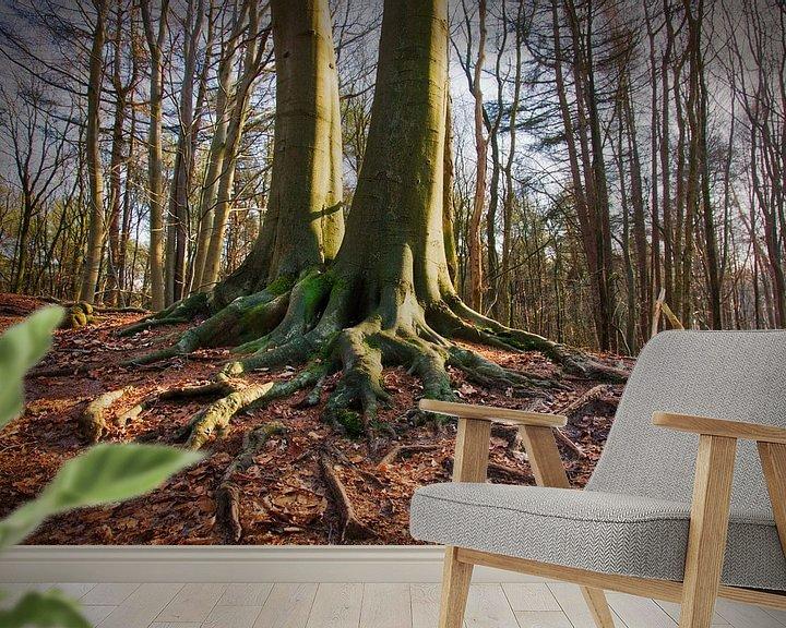 Sfeerimpressie behang: Twee beuken die met elkaar verbroederd zijn. van Anneke Hooijer
