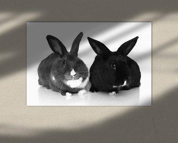 Kaninchen von Anouk Davidse