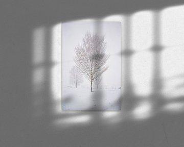 Winter beauty van Iris Zoutendijk