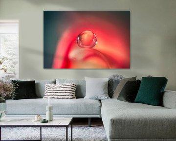 macro van een waterdruppel op een rozenblaadje von Bert Nijholt