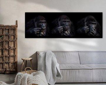 Expressies van een gorilla von Ron Meijer Photo-Art