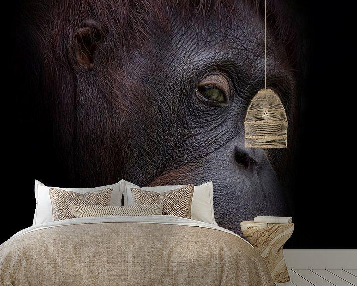 Beispiel fototapete: Funny orangutan face von Ron Meijer Photo-Art