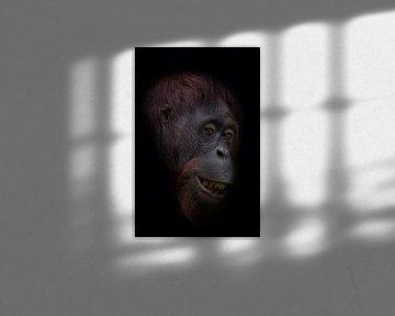 Grappige orang oetan gezicht van Ron Meijer Photo-Art