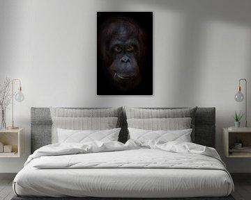 Grappige orang oetan gezicht von Ron Meijer Photo-Art