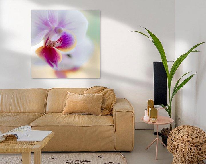 Sfeerimpressie: orchidee van Maja Ooms