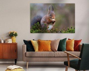 Eekhoorn van Joop Lassooij