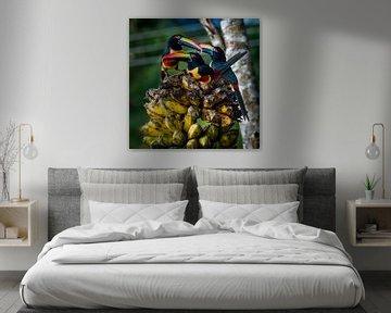 Tropische Vögel arassari von Corrine Ponsen