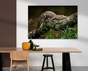 Krokodil-Baby von Corrine Ponsen