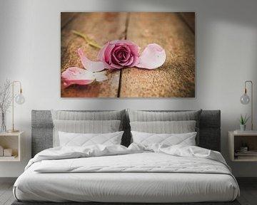 rosa Rose von chantal vogelpoel