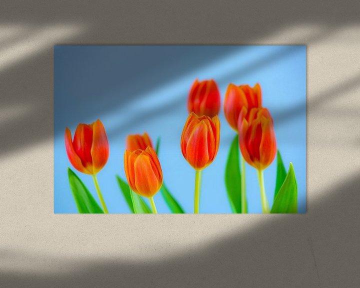 Sfeerimpressie: Bosje tulpen van Maerten Prins