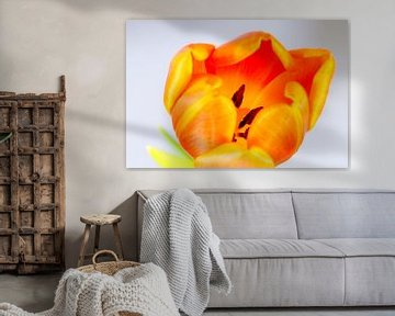 Oranje tulp von Maerten Prins
