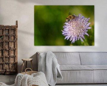 Schwebfliege auf lila Blume von Joop Gerretse
