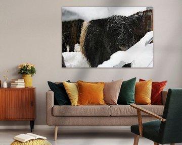 winterse koe van Yannick  van Loon