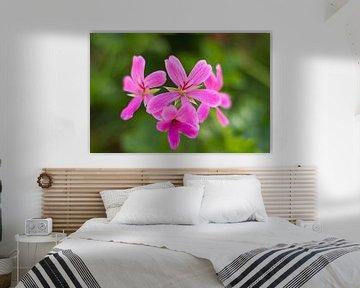 Pink Flower Explosion von Charlene van Koesveld
