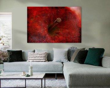 Rode appel in close up van Jack van der Spoel