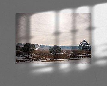 Winters heidelandschap Brunssummerheide