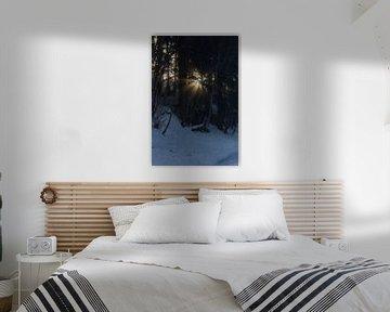 zon winter bomen bos von Lorance Jonkers