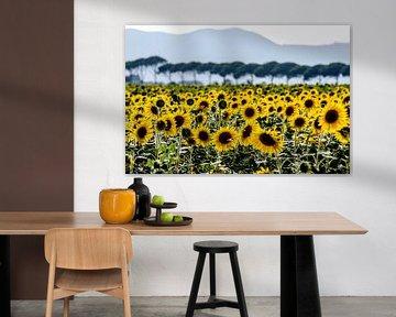 Zonnebloemen in Toscane von Rob Herstel